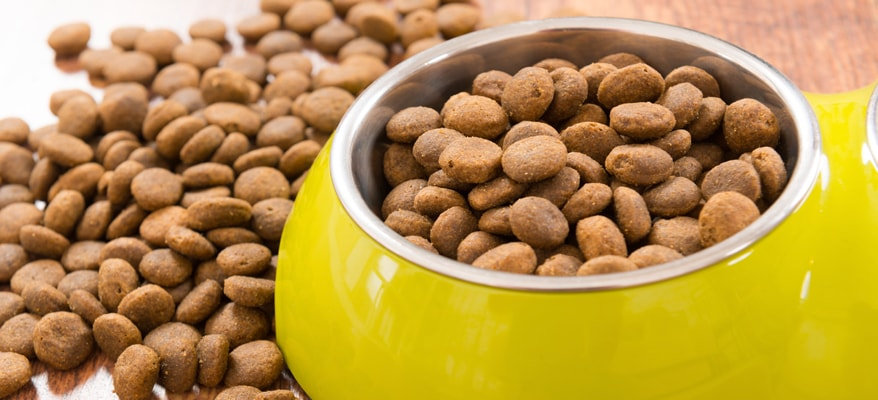 Benefits Of Mixing Wet And Dry Dog Food