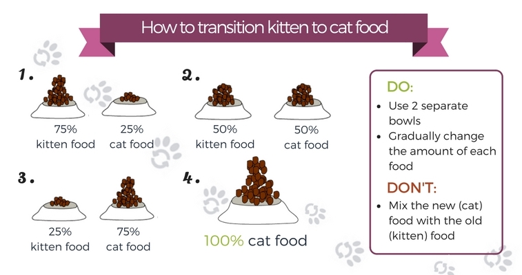 guide-to-switching-kitten-food-to-cat-food