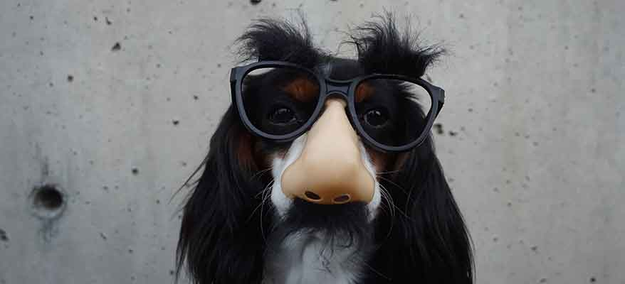 funny-dog-wearing-glasses-disguise