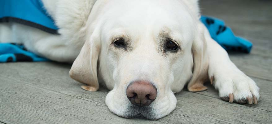 poorly-dog-from-not-storing-dog-food-correctly
