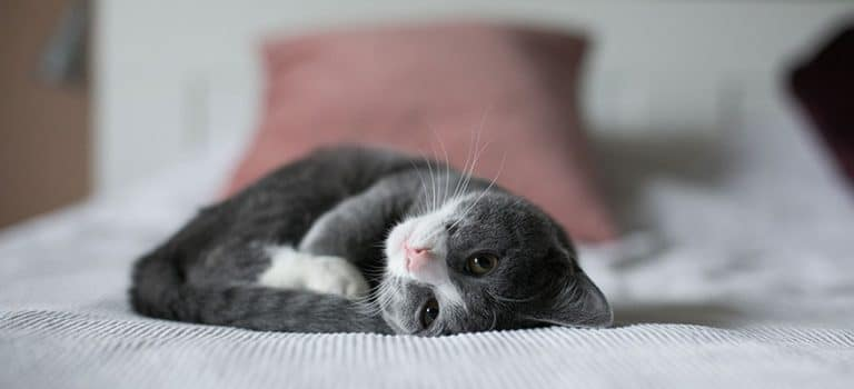 Kitten on a bed